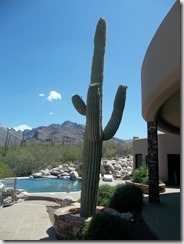 1347 E Desert Garden Drive, Tucson, AZ 85718_8